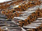 Peste 1.200 de exploatări forestiere, ocoale silvice și locuri de depozitare a lemnul au fost verificate de Poliția Română
